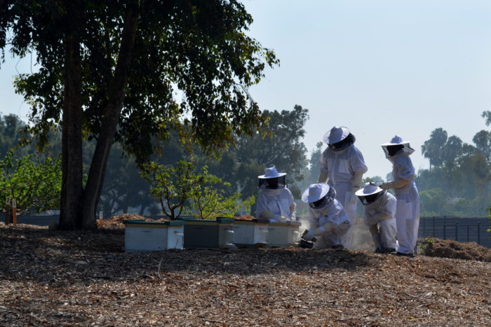 Roy Reid, Oscar Maldonado, and others caring for CSUF's bees. (Photo credit: Sara Johnson)