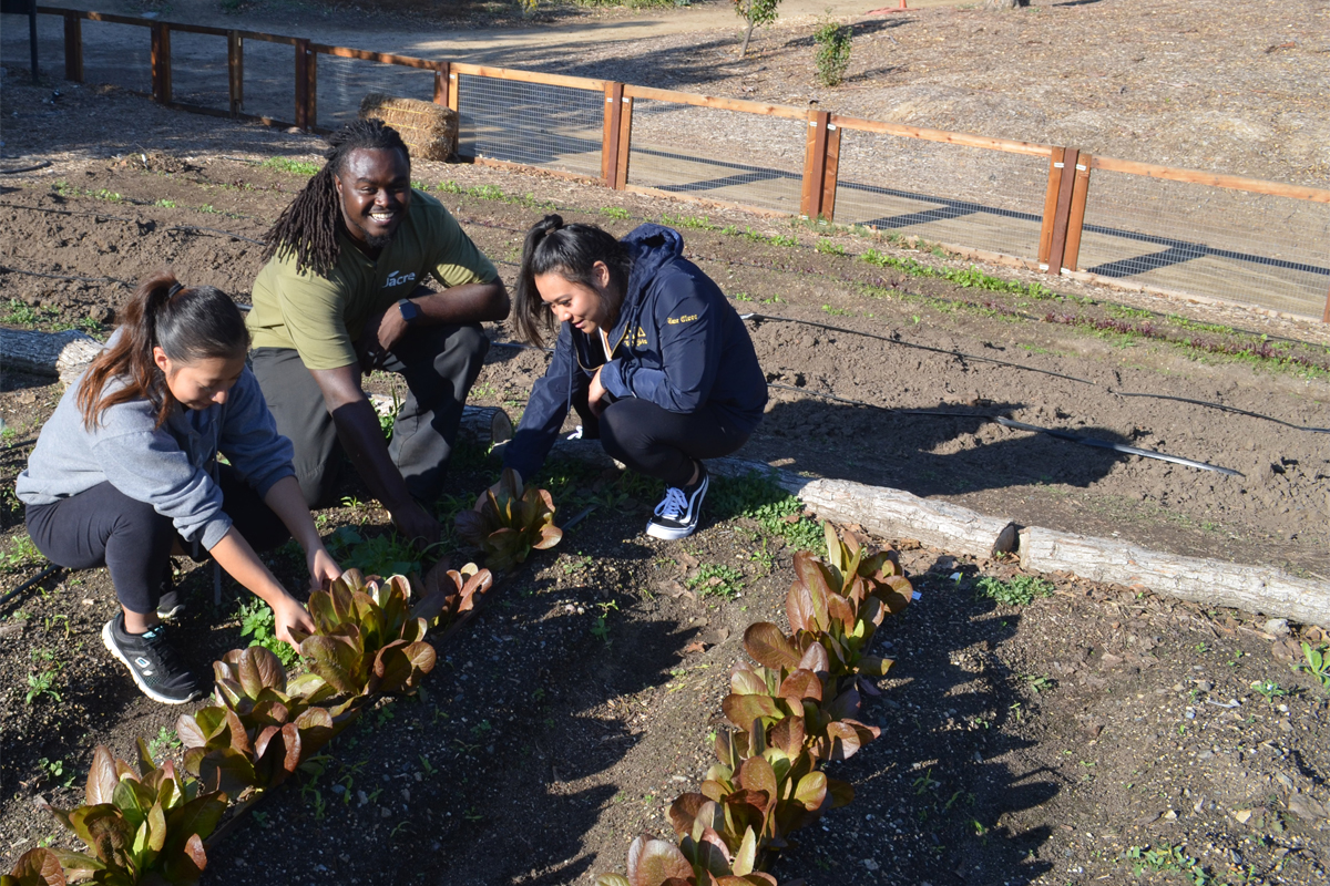 Roy Reid (center) working with service learning students at the CSUF garden. (Photo credit: Sara Johnson)
