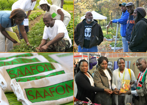 saafon black farmers support organization