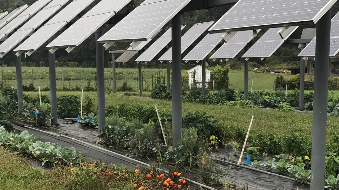 Agrivoltaics Solar Panels On Farms Could Be A Win Win Civil Eats