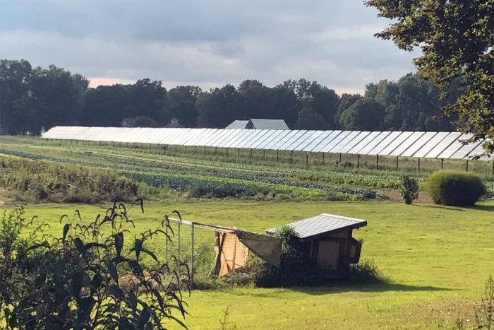 A dual-use solar array in Massachusetts.
