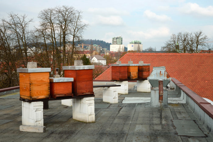 Beehives are set up on the roof of the urban planning institute of the Republic of Slovenia (UIRS).