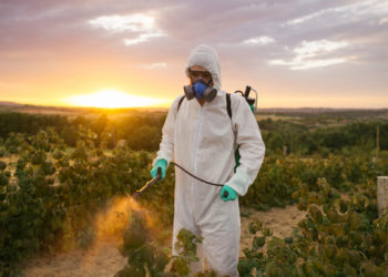 man spraying pesticides in a farm field