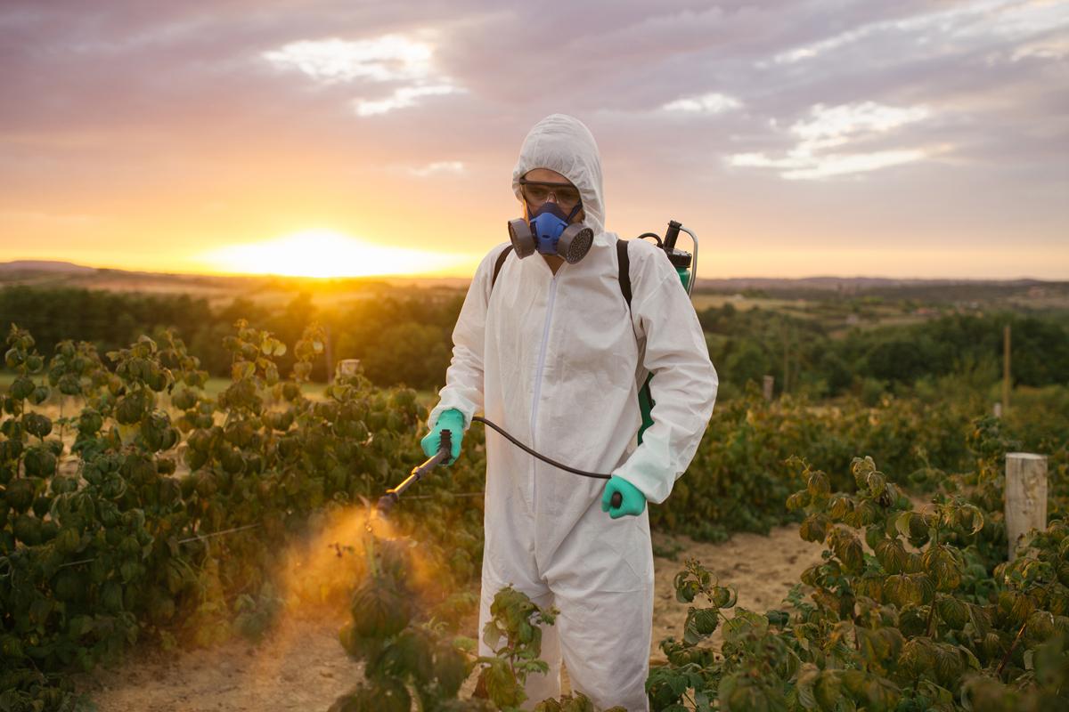 man spraying pesticides in a farm field