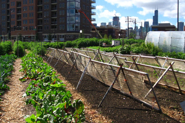 City Farm is a working sustainable farm that has operated in Chicago for over 30 years. (Photo CC-licensed by Linda from Chicago)