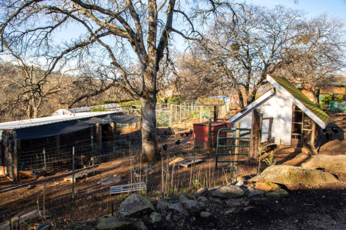 Free-range chickens spend the night in airy chicken coops (left) and lay their eggs in cozy red sheds (center), where they feel safe from predators.