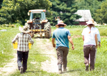 Workers at UK's South Farm, a certified organic operation that is a part of UK Dining's Local Salad Bar Program. (Photo © Sarah Caton)