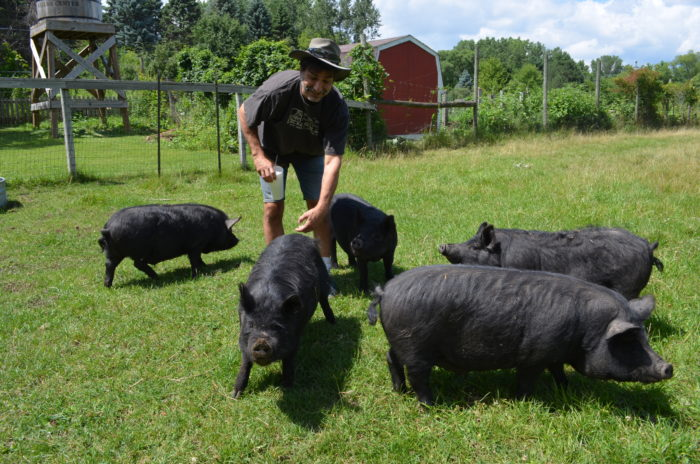 Don Oberdorfer of Dodge Nature Center with his herd of Guinea Hogs. (Photo © Jeannette Beranger/The Livestock Conservancy)
