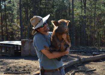 "Marc Mousseau of Island Creek Plantation and his Ossabaw gilt ""Keira"". (Photo © Jeannette Beranger/The Livestock Conservancy)"