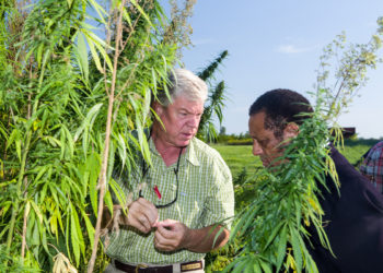 Discussing the hemp research plot on the University of Kentucky's Spindletop Research farm in northern Fayette County. (Photo credit: UK College of Agriculture, Food & Environment)