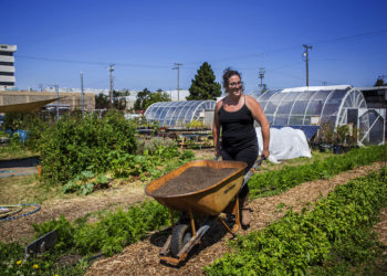 farming at urban adamah - woman moving a wheelbarrow