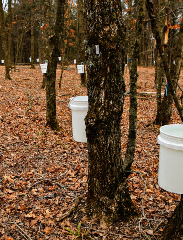 Top photo: University of Missouri students produce maple syrup at Baskett Wildlife Research and Education Center. (Photo CC-licensed by the UM College of Agriculture, Food, and Natural Resources.)