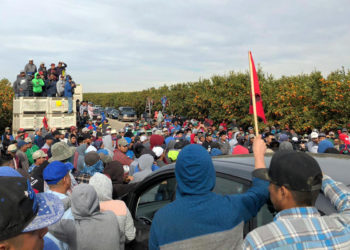 Fruit pickers protest in the Wonderful Company's orchards. (Photo courtesy of UFW)