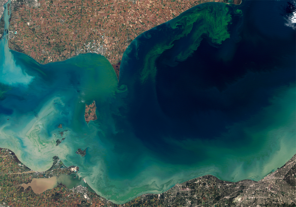 A 2011 photo from the NASA Earth Observatory showing the blue green algae bloom.