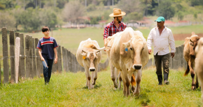 a family of farmowners herding cattle