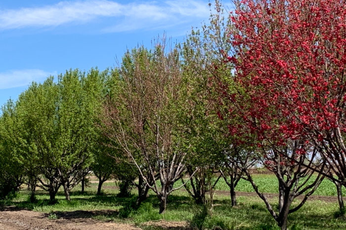 Orchards line the property near the side of the farm. (Photo by Rudri Patel)