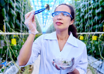 scientist examing synthetic biology synbio food grown in a lab