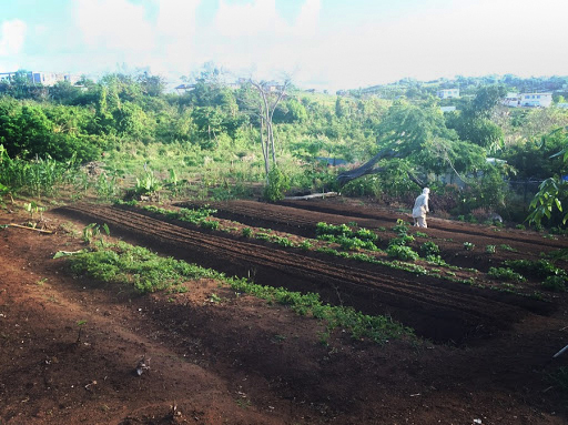 A view of the farm's double-dug beds. (Photo courtesy of Finca Conciencia)