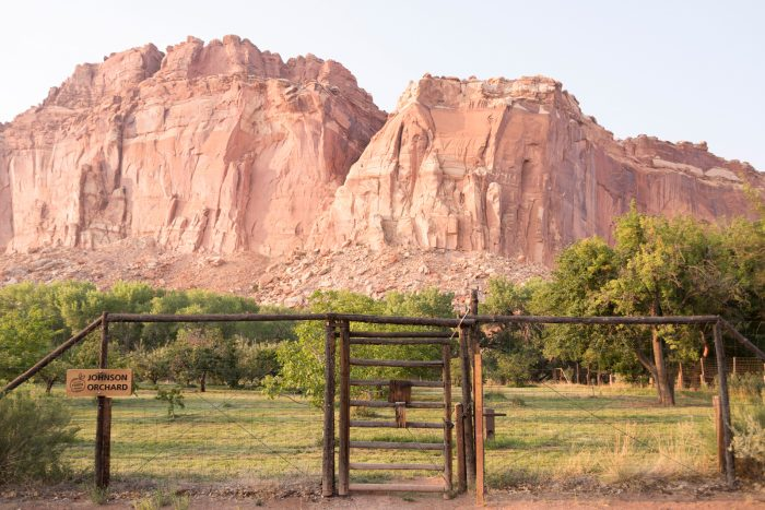 The gates to the Johnson Orchard. Nels Johnson was one of the first homesteaders to arrive in the Fruita area in the late 1880s, then called Junction. He was allotted 160 acres, and planted 11 acres of orchards by the turn of the 20th century. The National Park Service began acquiring the private land within Fruita in the 1930s; by 1964 there were only 16 acres of private holdings in Fruita. During this transition period the orchards were maintained by local residents through special use permits distributed by the National Park Service.