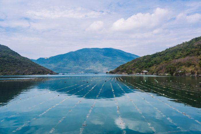 Australis Aquaculture experiments with longline seaweed farming as a rotational crop to its barramundi operation in Van Phong Bay, Vietnam.