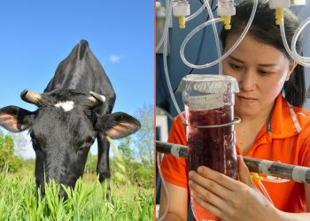 scientist working on seaweed to help cows reduce their climate change impacts