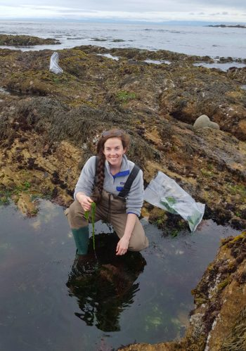 Moss Landing Marine Laboratories graduate student Katherine Neylan collecting native seaweed samples. (Photo courtesy of Luke Gardiner)