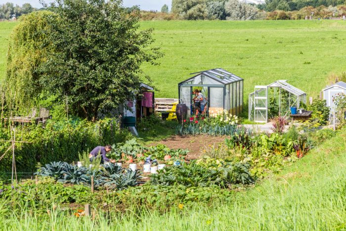 People working in the vegetable garden with a green house