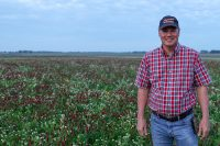 Rick Clark standing in his field of crimson and balansa clover cover crops.