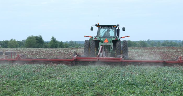 Rick Clark roller crimps fixation clover, crimson clover, oats, radish, and peas. He will plant corn right after this process.