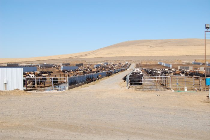 The Vandenbrink dairy, with roughly 3,500 dairy cows, in Ione, Oregon. (Photo CC-licensed by Friends of Family Farmers)