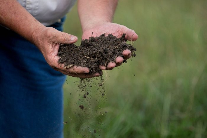 Will Harris holds healthy soil at White Oak Pastures. (Photo courtesy of White Oak Pastures)