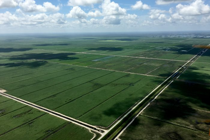 Sugarcane fields in Florida