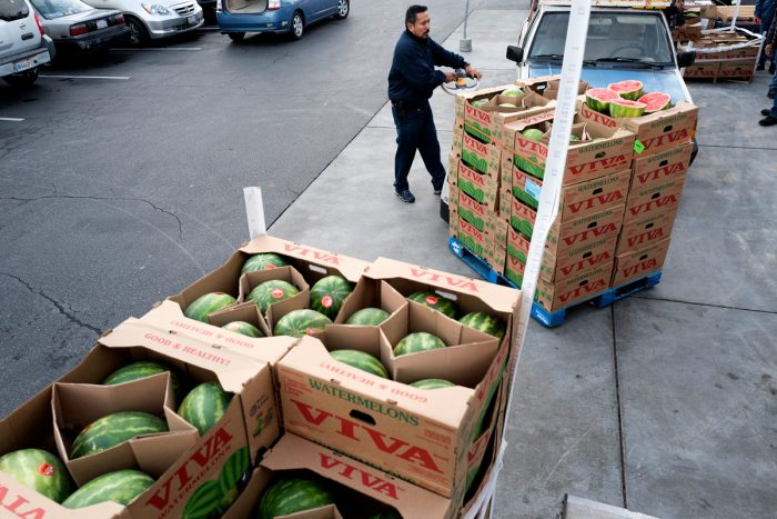 Recovering watermelons for Food Forward. (Photo © Vanessa Bly)