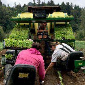 farmers planting organic food