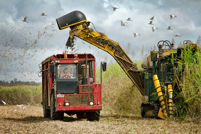 A mechanical sugar cane harvester in Queensland, Australia. (Photo by Michele Jackson / iStock)