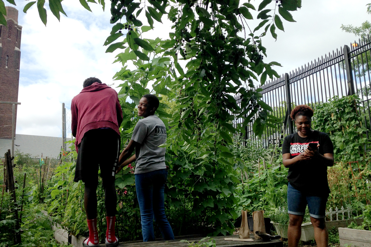 Sunflowers and luffa vines — related to cucumber, gourd and squash — are tended by a Community Roots participant and mentor in a Brooklyn school community garden with their instructor (right). (Photo by Pieranna Pieroni)