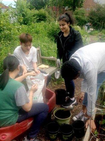 Community Roots students planting seeds in a Brooklyn public school garden. (Photo by Pieranna Pieroni)