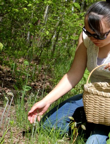 Mino Wiisinidaa! project coordinator LaTisha Coffin Harvests fiddlehead ferns for an indigenous foods cooking demonstration. (Photo CC-licensed by the USDA)