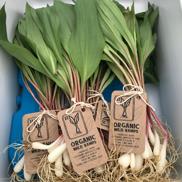 Wild Ramps bundled for sale at the farmers' market. (Photo credit: Mayapple Farms)