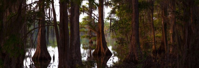 Cypress trees line the shores of a small lake on the property of New Communities in Dougherty County, Georgia in May 2019. Photo by Mike Kane for Marguerite Casey Foundation's Equal Voice News