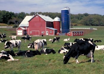 An upstate New York dairy farm. (Photo CC-licensed by the USDA)