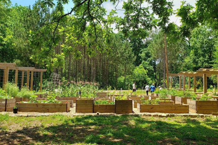 A wide view of the Atlanta Food Forest at Browns Mill. (Photo courtesy of AgLanta)