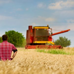 a farmer in a field looking out at the harvest and thinking about supply management
