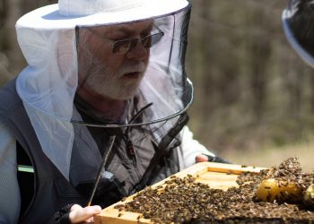 Beekeeper tending a hive of bees