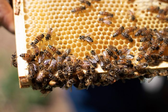 bees covering a hive