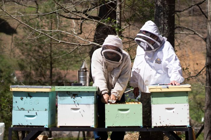 two beekeepers in training tending their hives