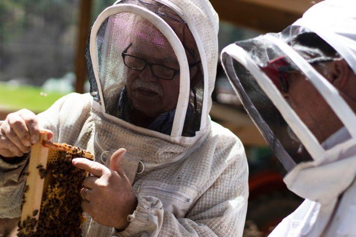 two beekeepers tending hives