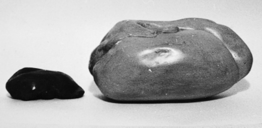 A normal bird's liver (left) compared to one fattened for foie gras. (Photo credit: Voters for Animal Rights)