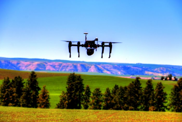 A quadcopter drone flies over a garbanzo field. (Photo courtesy of Robert Blair)