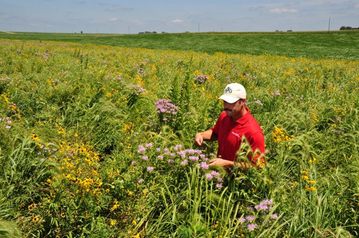 Prairie Strips on Tim Smith's farm in Eagle Grove, Iowa.